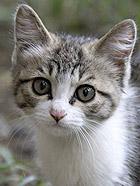 实拍公园里的流浪猫