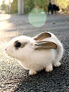 秋日的萌兔写真