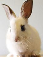 美丽动人 晒晒我家的小萌兔