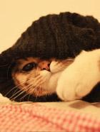 胖猫的黑衣人look