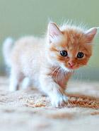 家里的可爱小奶猫