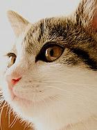 超萌的一只家猫