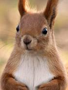 超萌 一起来看看可爱的小松鼠