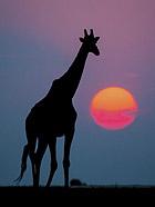 最美的动物野性图片