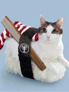 让人垂涎欲滴却不能吃 乖张可爱的猫咪寿司