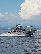 日本长崎大海看海豚