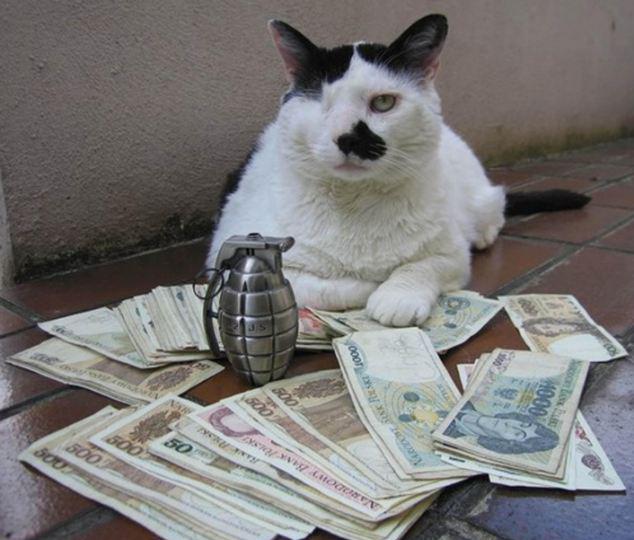 如何给猫咪做衣服步骤图片大全