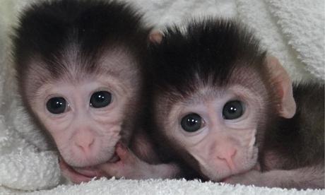 那些呆萌可爱的动物宝宝