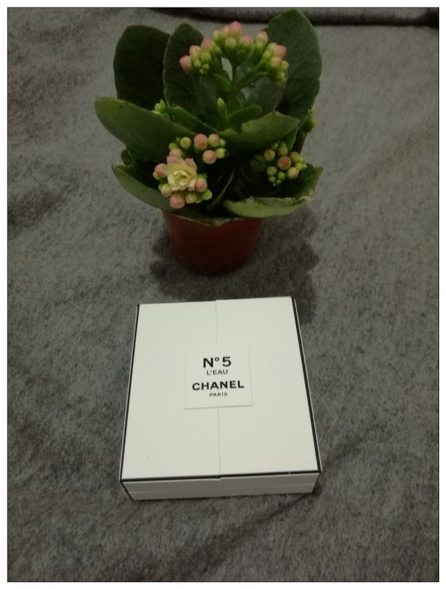 香奈儿5号香水 ------一款令人着迷的味道.