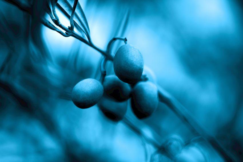 护肤也要看成分,#蓝色乐活#养成健康肌无压力!